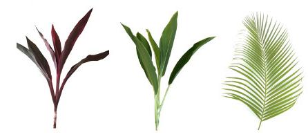 葉物、ロベ、ドラセナ、アレカヤ